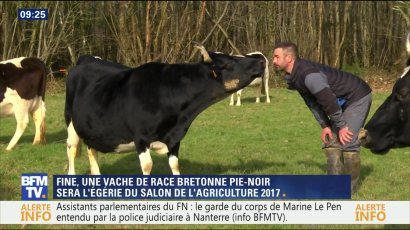 BFMTV Fine vache bretonne vignette 2